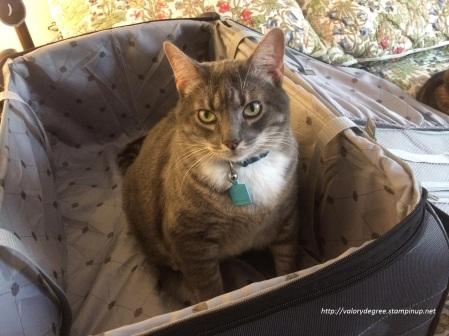 Ziggy-Bags